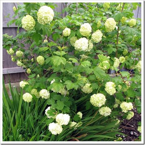 insp garden mel1