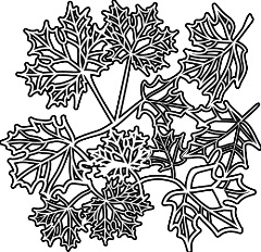 TCW188 Maple Leaves